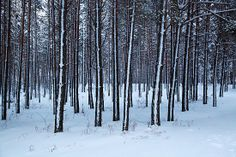 Forest during the winter.
