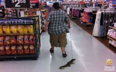 Excuse me while I take my crocodile for a walk.