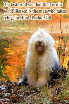 Oh, taste and see that the Lord is good! Blessed is the man who takes refuge in Him!  Psalm 34:8