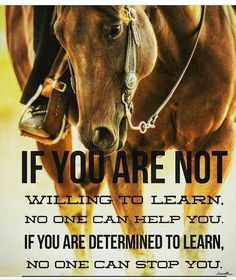 You can lead a horse to water, but you can't make it think. Rodeo Quotes, Equine Quotes, Cowboy Quotes, Cowgirl Quote, Equestrian Quotes, Hunting Quotes, Deer Quotes, True Quotes, Great Quotes