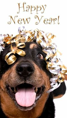 36 Best Happy New Year Pawty Images Dogs Cut Animals Cute Funny