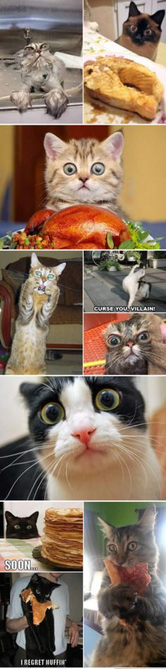 funny cats shocked faces