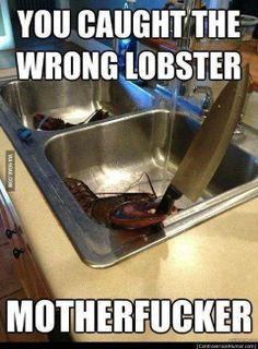 You caught the wrong lobster..