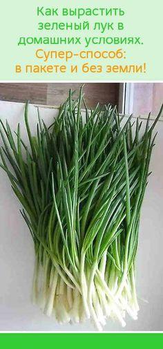 Как вырастить зеленый лук в домашних условиях. Супер-способ: в пакете и без земли!