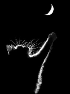 Reaching for the Moon ....