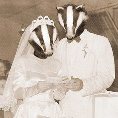 Badger Wedding 5x7 Anthropomorphic print on Etsy, $15.00