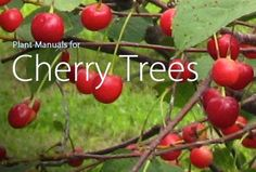 Plant Manuals for Cherry Trees