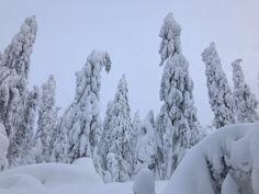 #Koli #Finland #snow