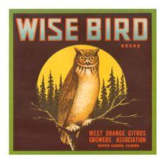 Wise Bird Citrus - Owl