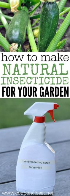 How to make Natural Pesticides for your Garden - Homemade Insecticide is easy to make and much better than store bought chemicals. Anyone can make this Homemade pesticide.