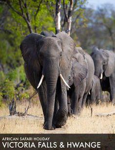 African Safari Tour 2015: Victoria Falls and Hwange