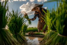 I am farmer by sarawut Intarob on 500px