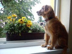 yellow house ideas: Yellow Yellow Houses, House Ideas, Dogs, Animals, Animales, Animaux, Pet Dogs, Doggies, Animal
