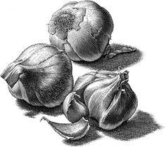 Garlic Bulbs And Cloves