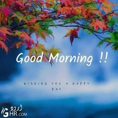 Good Morning Rose Images, Happy Good Morning Quotes, Good Morning Beautiful Pictures, Good Morning Nature, Morning Wishes Quotes, Cute Good Morning, Good Morning Flowers, Good Morning Messages, Morning Pictures