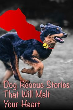 Dog Rescue Stories That Will Melt Your Heart American Dog, Pet Treats, Rescue Dogs, Dog Breeds, Hero, Animals, Animais, Animales, Animaux