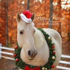 Great Christmas Card Idea with Horse - so doing this with the horses this year. Can't wait!