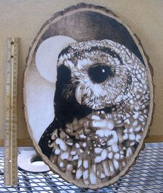 owl pyrography drawing by jmix2