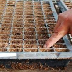 Seed-Starting Secrets of a Greenhouse Professional - Organic Gardening - MOTHER EARTH NEWS. Very good information on seed starting for beginners and experts alike.