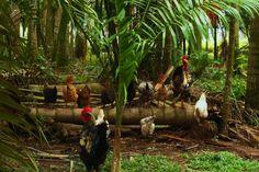 Todos sobre el tronco Los Llanos - Meta Colombia