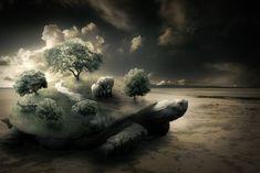 Create a Surreal Turtle Image - Photoshop Tutorial - Pxleyes.com