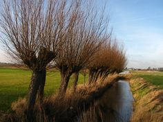 Culture in Vlaardingen, Netherlands (one day snow view tree willow landscape) - a photo by johan slee