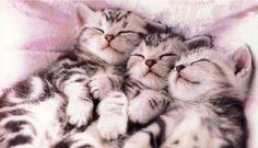 #Cats #Cat #Kittens #Kitten #Kitty #Pets #Pet #Meow #Moe #CuteCats #CuteCat #CuteKittens #CuteKitten #MeowMoe #CuteCats... https://www.meowmoe.com/34951/
