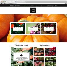The Seed Shop - A stunning website template for farms, gardening suppliers and eco brands