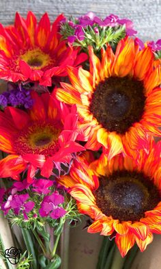 "Send the Bouqs epic flowers from an eco-friendly, sustainable farm to your recipient""s door."