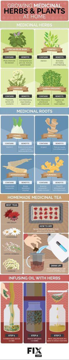 Growing Medicinal Herbs and Plants at Home | Fix.com