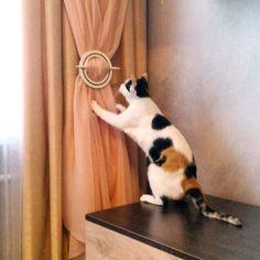 Доброго утра, друзья! А ваши пушистые помощники уже приступили к авторскому надзору?! :) #фото и #кот @oksagaraeva #cat #fabric #шторы #портьеры #котики #котэ #котяра #кошки #животныевинтерьере #декорокна #galleria_arben