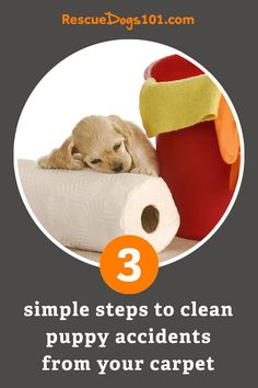Dog pee on your carpet? Follow these 3 easy steps now to get the stain and smell out fast. Foster dog mom tested and approved... #dogs #dogheatlh #puppy #housecleaning #rescuedogs101 Dog Pee Smell, Puppy Potty Training Tips, Living With Dogs, Rescue Puppies, Dog Urine, Dog Health Tips, Foster Dog, Dogs And Kids, Dog Mom