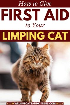 If you know what causes limping in cats, it makes sense to learn how to give first aid. The first step would be to assess the gravity of the situation. Closely observe how your cat is walking with a limp. Is she limping with just one leg? Is it left or right? Is your cat limping on their back leg or is it more that your cat limps on her front leg? Is she focused on limping on a front paw or a back paw? Read article for more info! #welovecatsandkittens #catlimping #cathealth #catfirstaid… Cat Health Care, How To Cat, Living With Cats, Cat Behavior, First Aid, Health Problems, Health Remedies, Cats And Kittens, First Aid Kid
