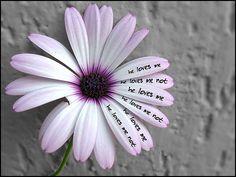 loves me?