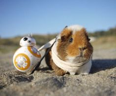 BB8 and his best friend