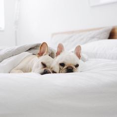 cute puppies, animals, tumblr // pinterest and insta → siobhan_dolan