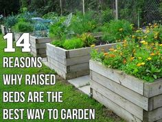 6. It is easier than trying to amend existing soil Soil everywhere is not the same. Some places may be too chalky and alkaline while you may find the ground in some gardens too acidic for most plants. Most vegetables prefer a neutral to slightly acidic soil that fall within the pH range of 5.5 to 7.5. However, there are a few acid-loving plants, like…   [read more]