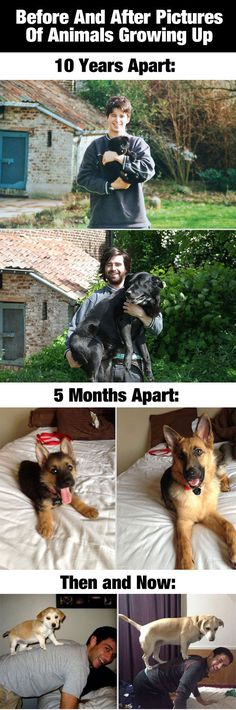 Before And After Photos Of Animals Growing Up