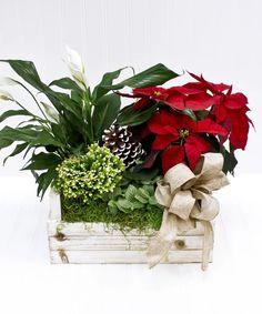 Poinsettia Planter Box - Yonkers New York Flower Shop Cut Flowers, Fresh Flowers, Yonkers New York, New York Flower, White Planters, White Plains, Rustic White, Blossom Flower, Planter Boxes