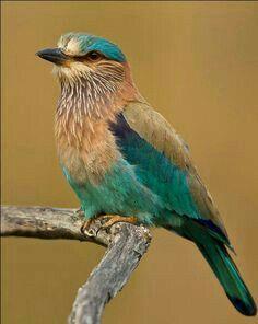 Μεγάλο πουλί Φούκινγκ