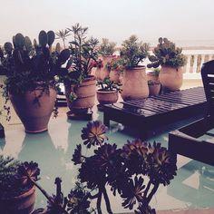 via @camillafrancesprints #instagram #IG #plants #planter #pool #tropical #morroccan #morrocco #cactus