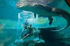 Zwemmen met Krokodillen