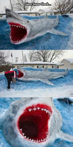 Snow Shark   // funny pictures - funny photos - funny images - funny pics - funny quotes - #lol #humor #funnypictures