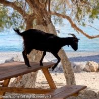 1-36 Kangaroo, Giraffe, Goats, Animals, Beach, Viajes, Baby Bjorn, Felt Giraffe, Animales