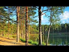 Rússia Selvagem: As Florestas Secretas [Dublado] Documentário National Geographic -  /   Wild Russia: The Secret Forest [Dubbed] Documentary National Geographic -