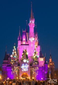 The Official Disney Fan Club- The Official Disney Fan Club Tokyo Disneyland's Cinderella Castle glows brightly at night with the newly added decorations. Walt Disney World, Disney Day, Disney Nerd, Disney Love, Disney Magic, Disney Parks, Disney Stuff, Disney Cruise Line, Nassau