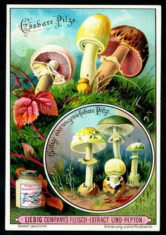 Liebig Beef Extract // Mushrooms #3 // German issue, 1900