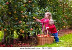 Picking Stock Photos, Images, & Pictures | Shutterstock