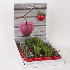 Cute Succulents Gift Set - Magnetic planters - Ideal Small Present - Perfect for use on fridges, whiteboards and other magnetic surfaces Diy Stocking Fillers, Stocking Filler Presents, Christmas Flowers, Christmas Home, Cool Gifts For Women, Gifts For Mum, Touch Love, Small Cactus