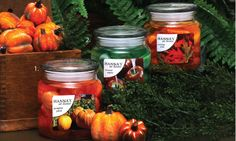 Hanna's at Home Harvest Apothecary Jel Candles  Autumn Walk, Caramel Apples, Pumpkin Patch  Jel with wax shapes  $9.99 on Amazon